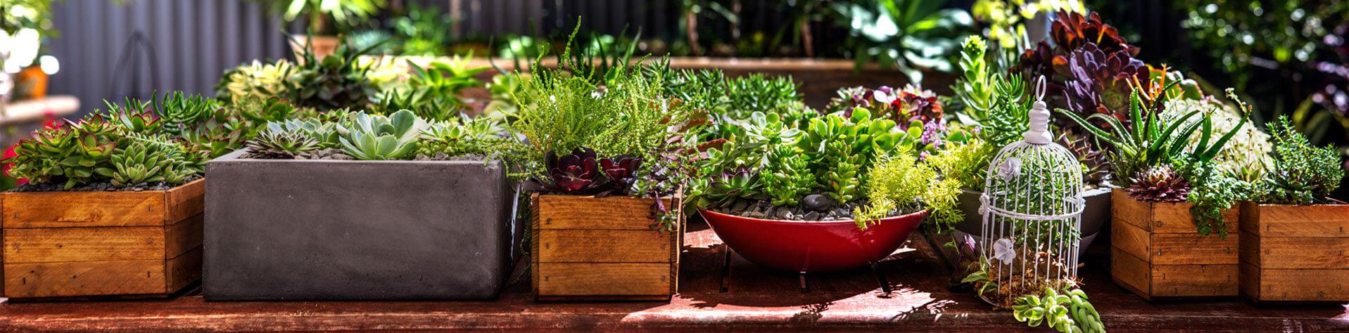 DIY Dipped Terra Cotta Succulent Favours